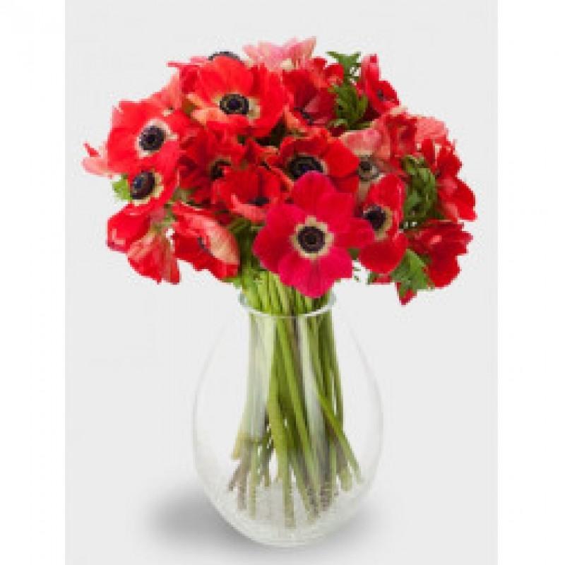 29 красных анемонов в вазе