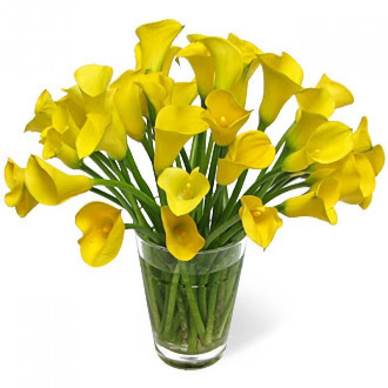 29 желтых калл в вазе