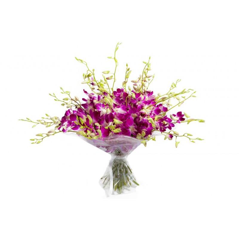 51 орхидея дендробиум