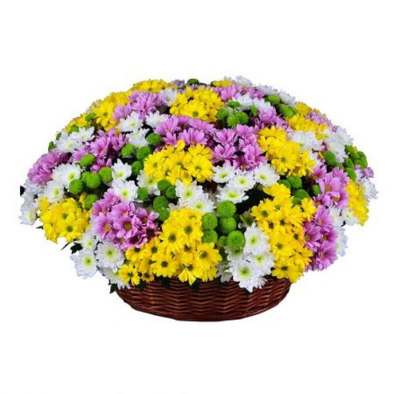 Огромная корзина из хризантем