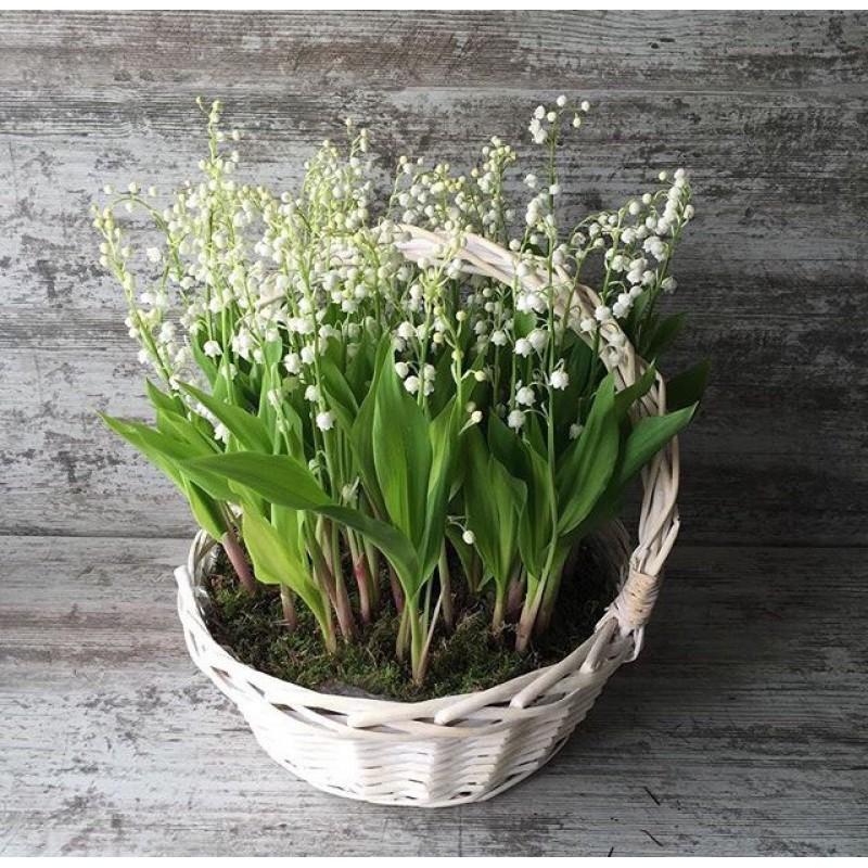 Корзина весенних цветов