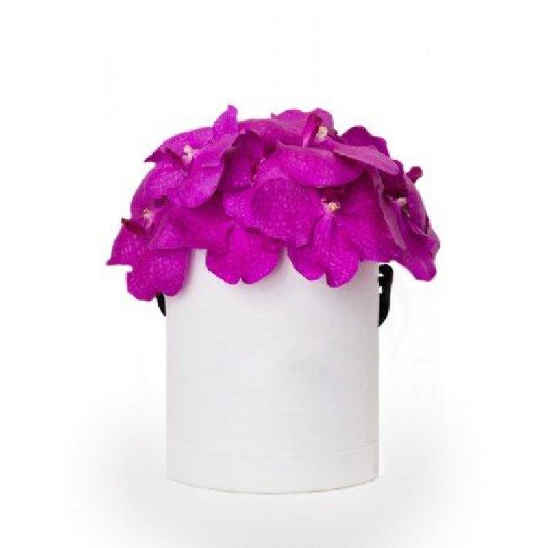 Орхидея Ванда в шляпной коробке