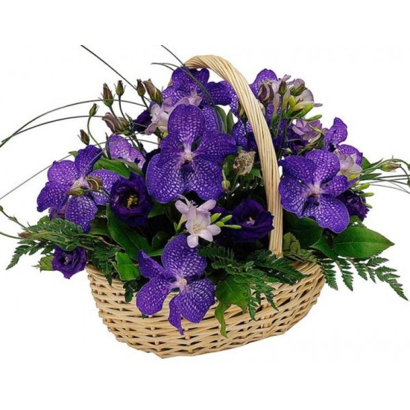 Орхидея Ванда в корзине