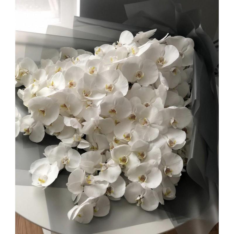 Безумные белые орхидеи