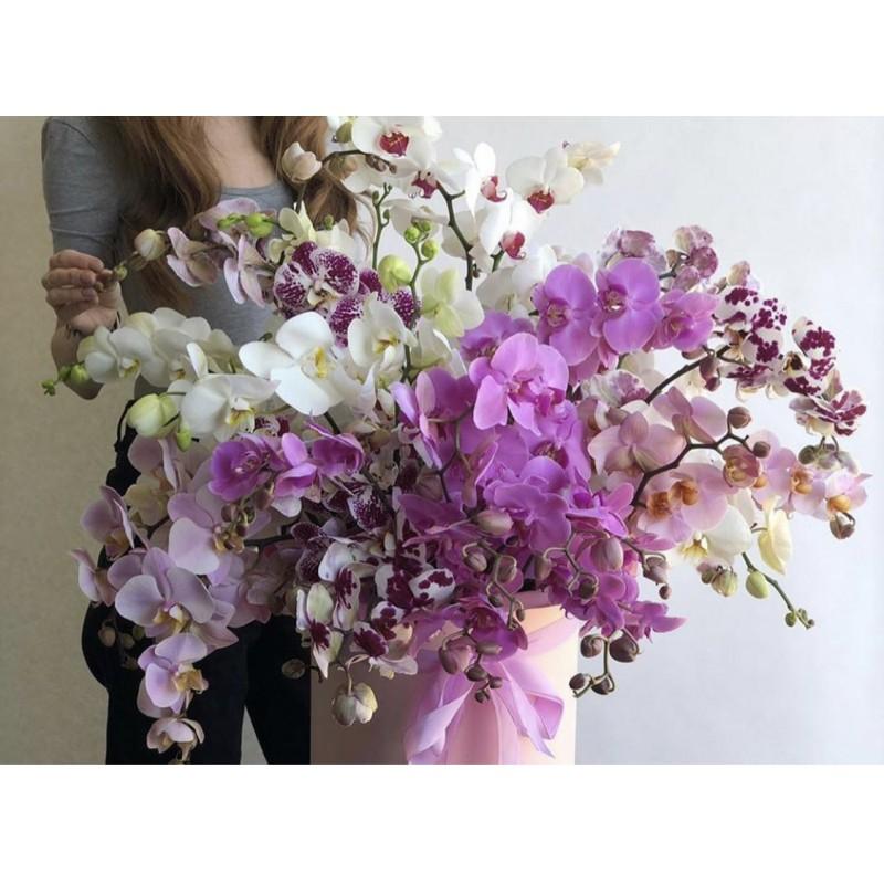 Каскад из орхидей