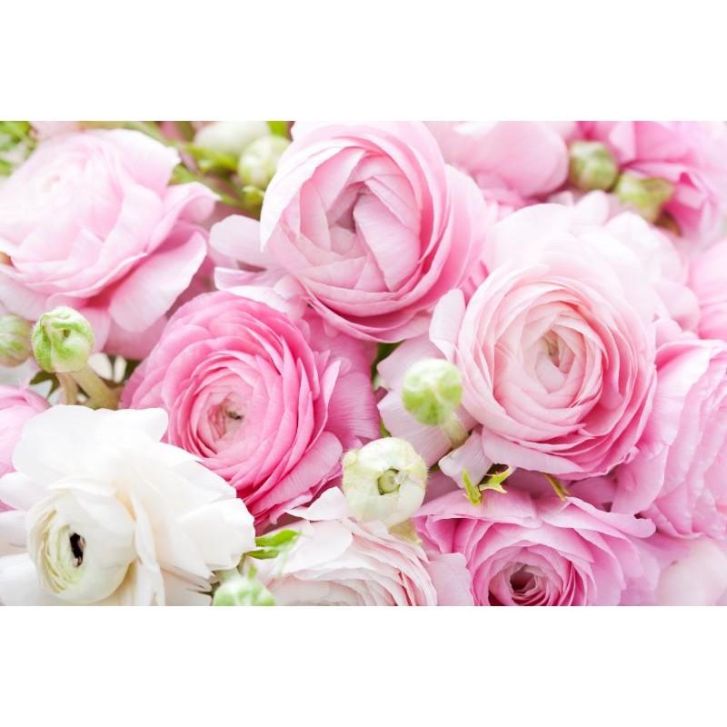 Розовые ранункулюсы поштучно от 9 штук