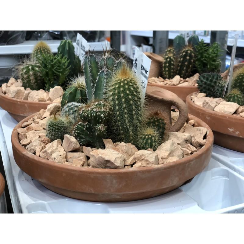 Любителю кактусов!