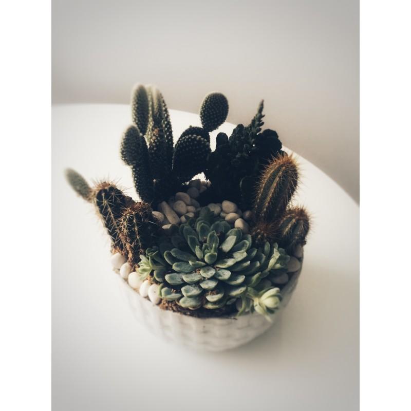 Вот такие кактусы!