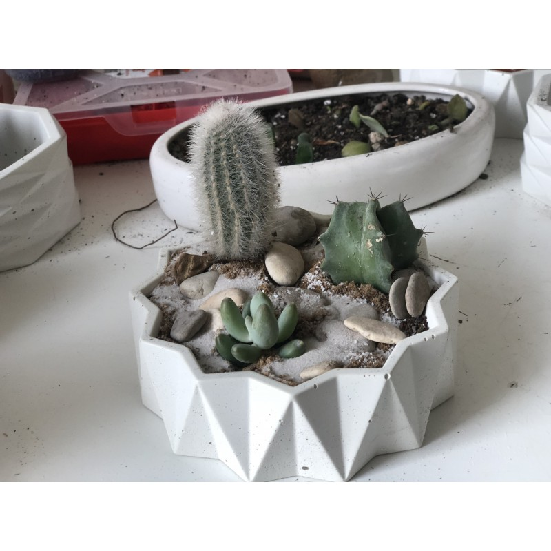 Колючки в бетоне