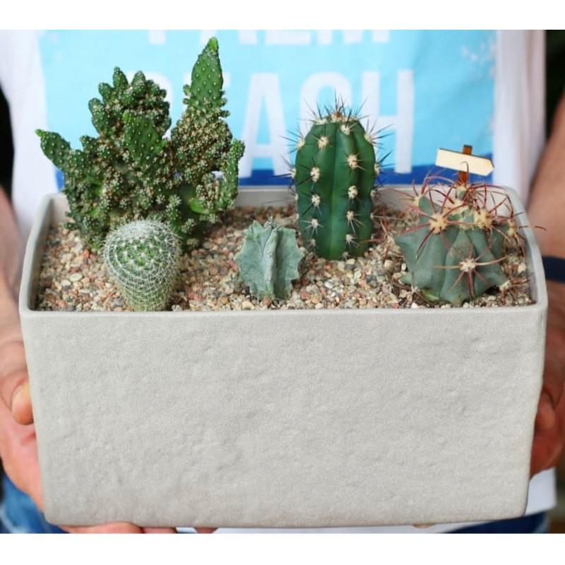 CactusBox
