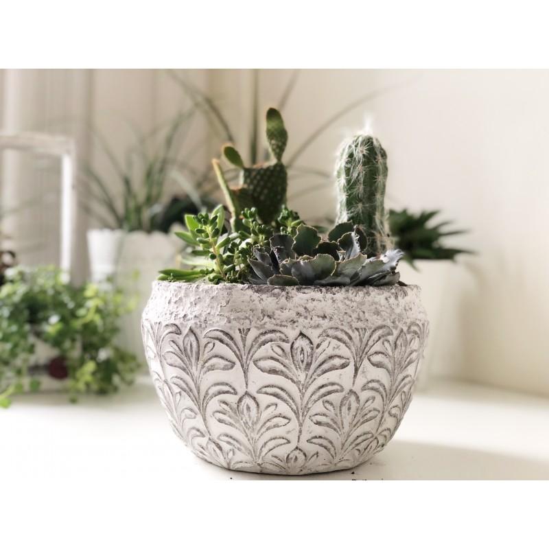 Садик для любителя кактусов