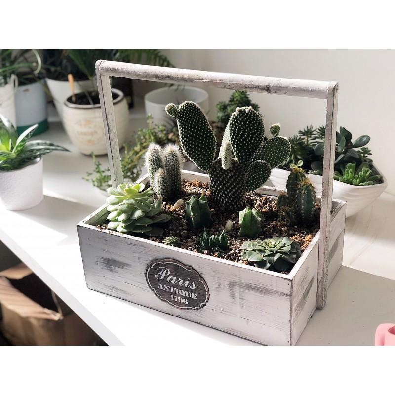 Большой ящик с кактусами