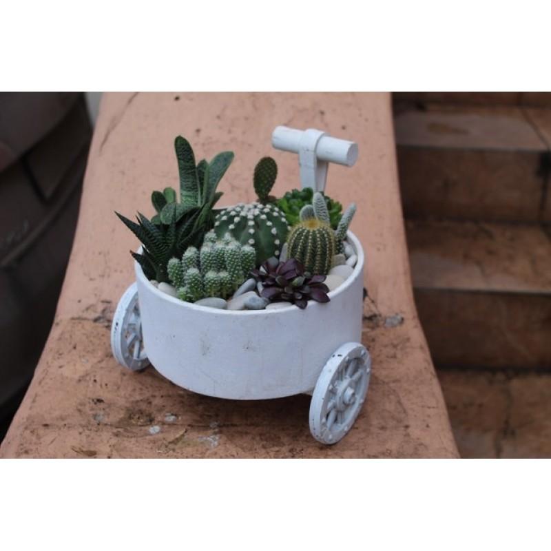 Колесница с кактусами
