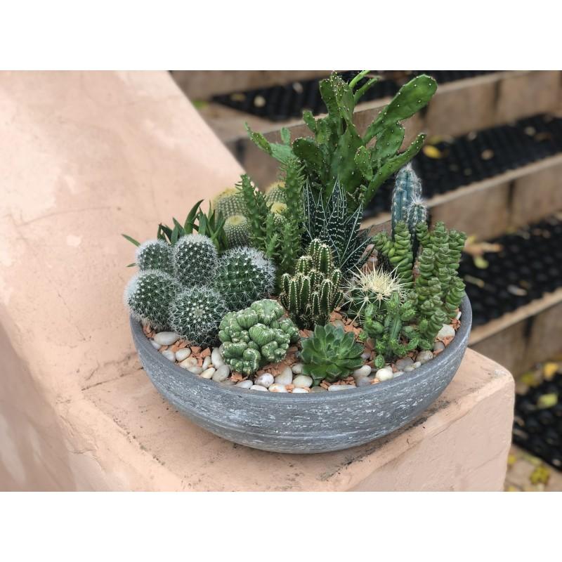Cactus #1
