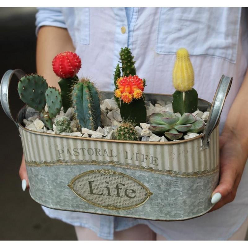 Ведёрко с кактусами